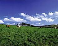 種山高原の画像